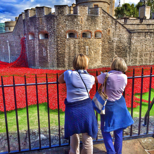 """""""Couple looking at red poppies at Tower of London"""" stock image"""