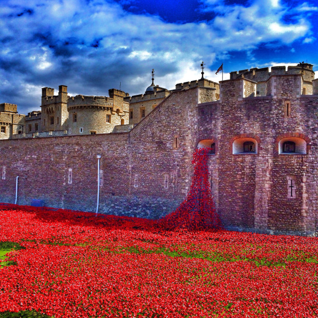 """""""Red poppies"""" stock image"""