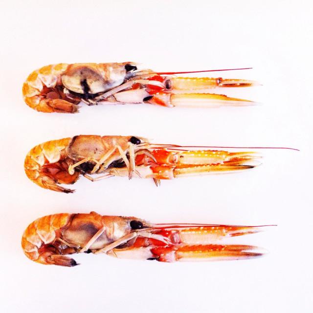 """""""Langoustine shellfish"""" stock image"""