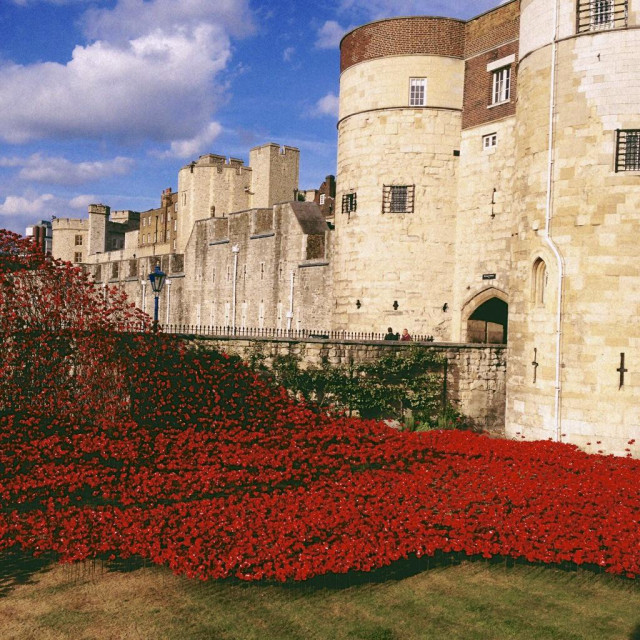 """""""Red poppies at the tower of London"""" stock image"""