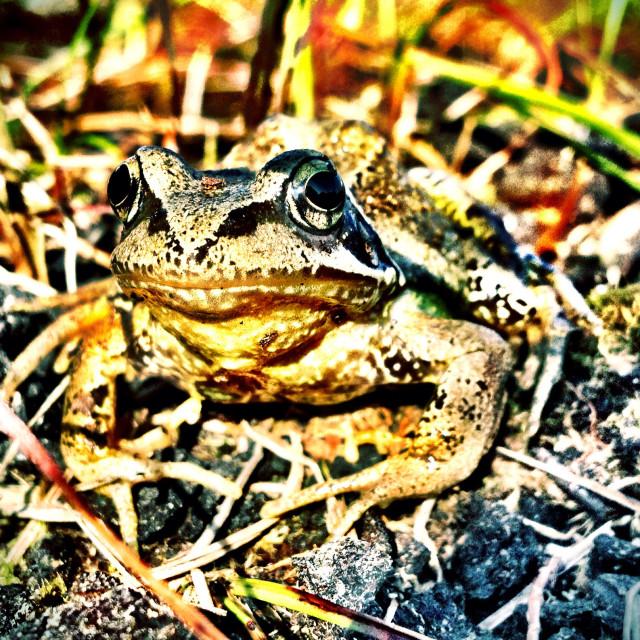 """""""Bog Frog3"""" stock image"""