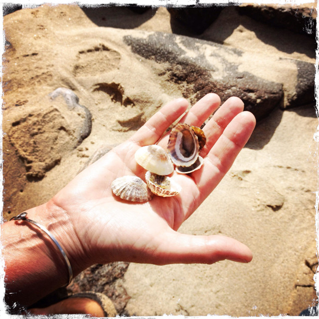 """Hand holding limpet shells on beach"" stock image"
