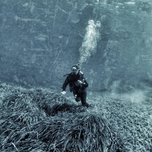 """""""Mature female scuba diver swimming underwater with camera over eel grass bed."""" stock image"""