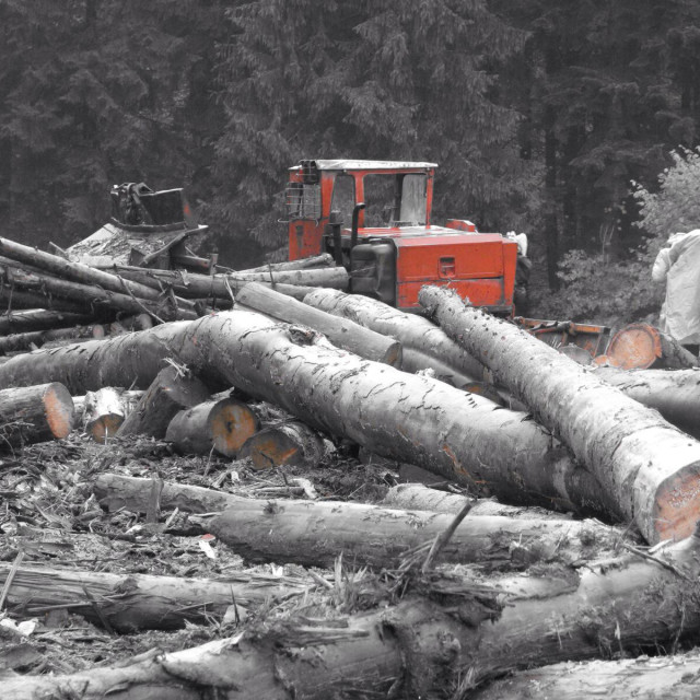 """Illegal felling of the forests, poachers, forest of Carpathians, tractor, ecology, violation of ecology"" stock image"