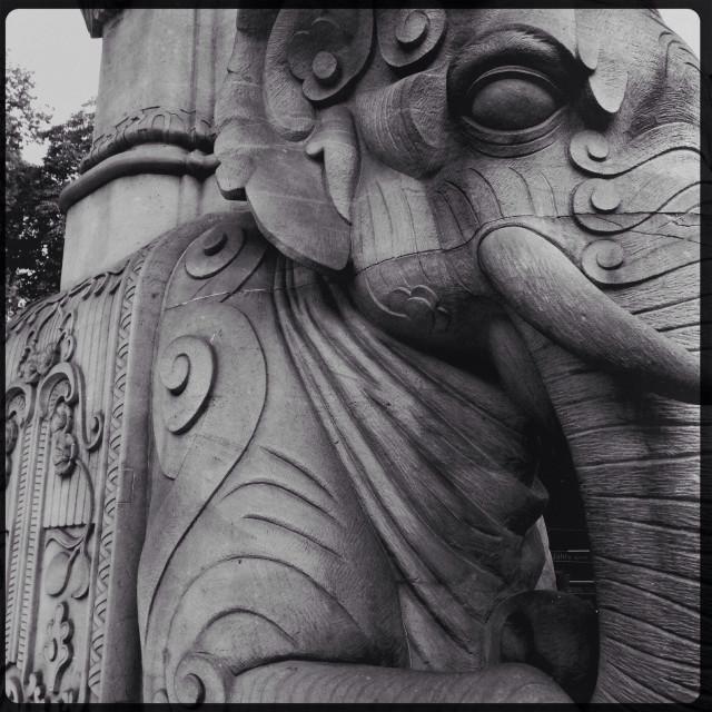"""Elefant"" stock image"