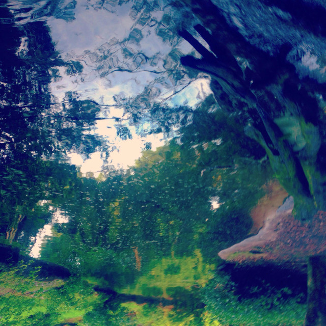 """Reflection of the jungle"" stock image"
