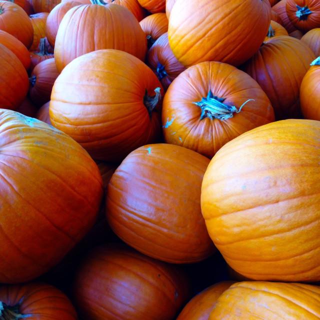 """Fall pumpkins"" stock image"
