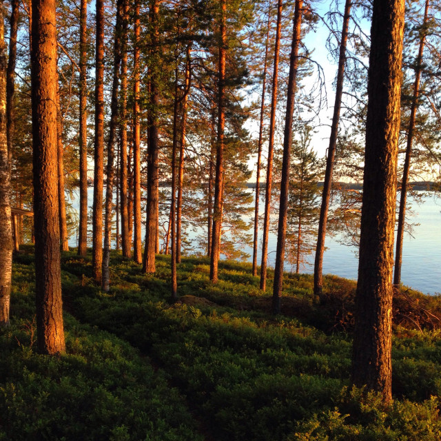 """""""A traditional Nordic summerhouse forest at a Finnish lake in Arctic Circle midnight sunshine"""" stock image"""