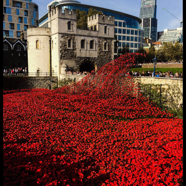 """""""A general view of the Blood Swept Lands And Seas Of Red ceramic poppy installation at The Tower of London in remembrance of the fallen of The Great War."""" stock image"""