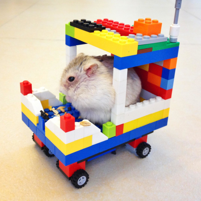 """A hamster with his DIY toy car"" stock image"