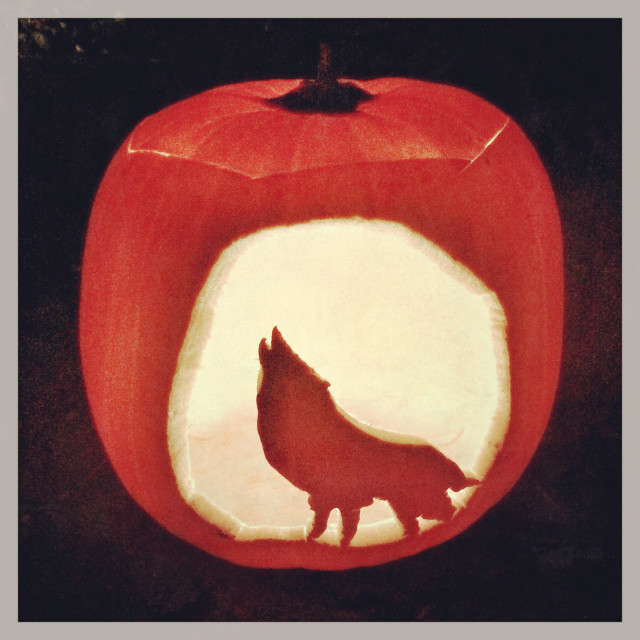 """""""A carved out pumpkin showing a wolf."""" stock image"""