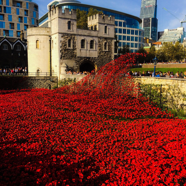 """""""Blood Swept Lands And Seas Of Red ceramic poppy installation at The Tower Of London in remembrance of the fallen of The Great War."""" stock image"""