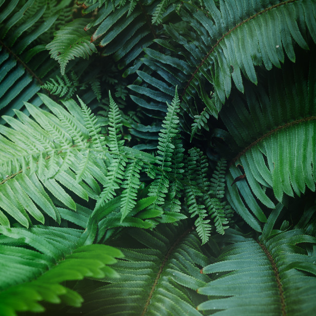 """""""Tropical Ferns"""" stock image"""
