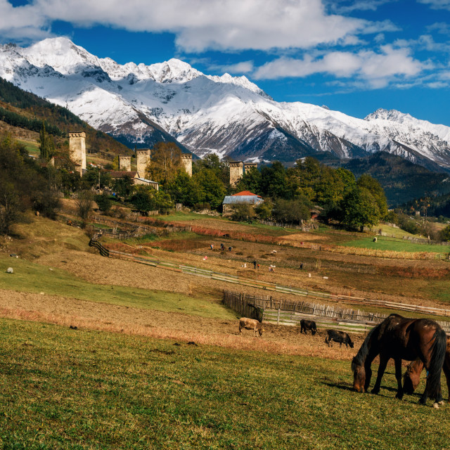 """Horses against Svan towers in Mestia, Svaneti, Georgia."" stock image"