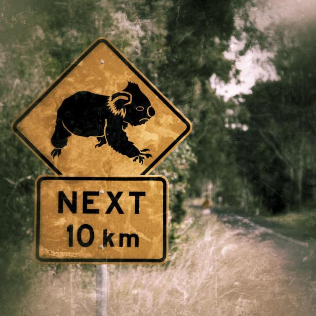 """""""Koalas crossing on next 10km"""" stock image"""