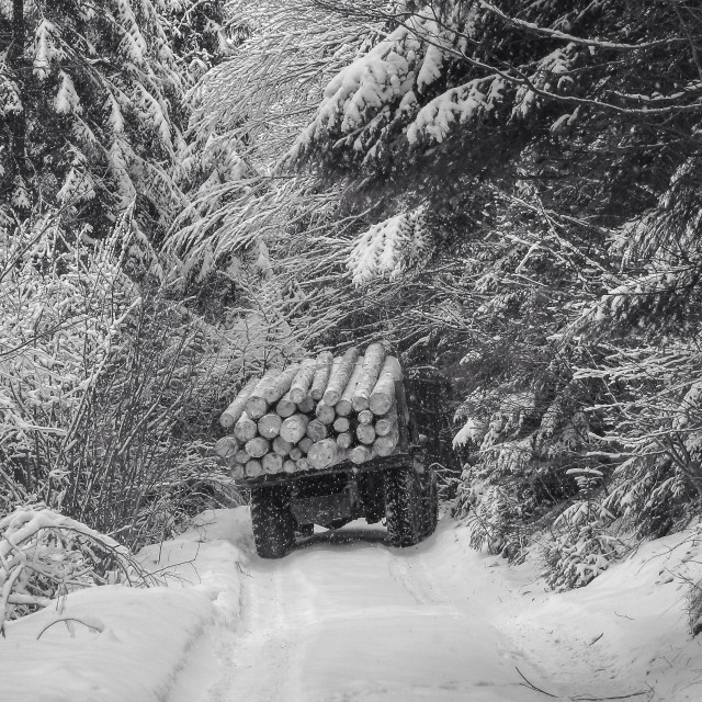 """deforestation in the Carpathians , KAMAZ, poachers , forest, winter"" stock image"