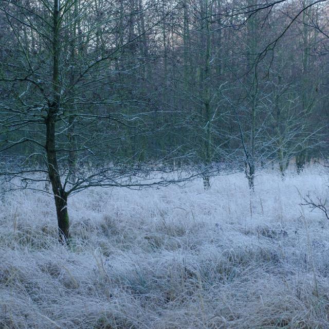 """Dreamy Winter Landscape"" stock image"