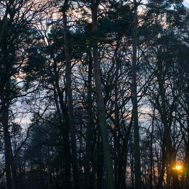 """""""Sunset In The Dark Forest"""" stock image"""