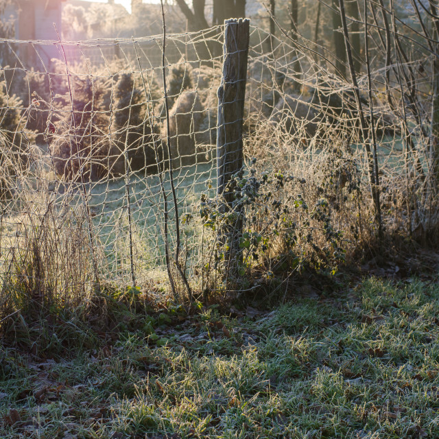 """Sunlit Fence In Winter"" stock image"