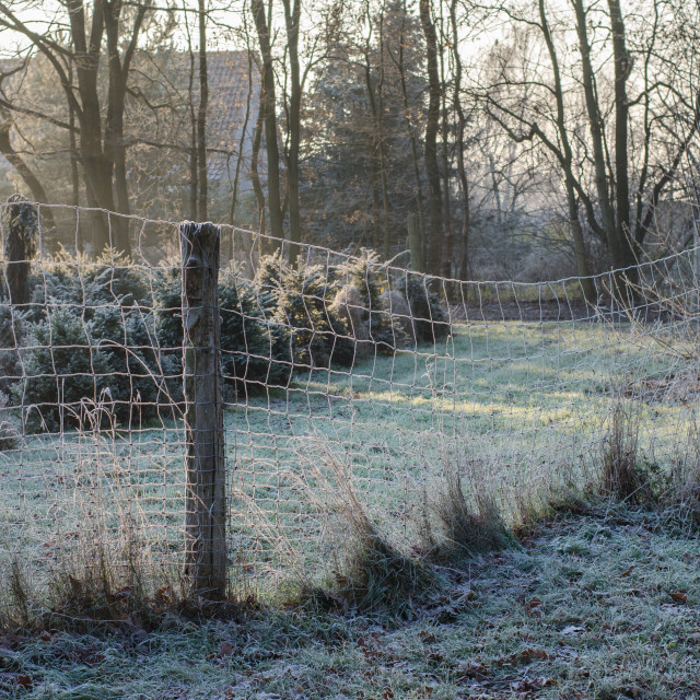 """""""Old Fence In Winter"""" stock image"""