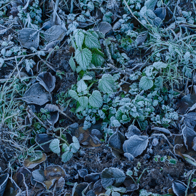 """""""Frozen Ground In The Forest"""" stock image"""