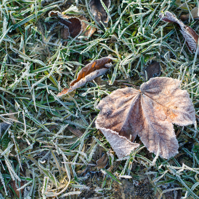 """""""Frozen Leaf On The Ground III"""" stock image"""