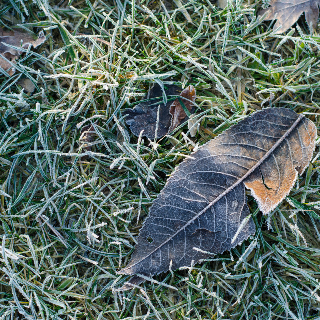 """""""Frozen Leaf On The Ground II"""" stock image"""