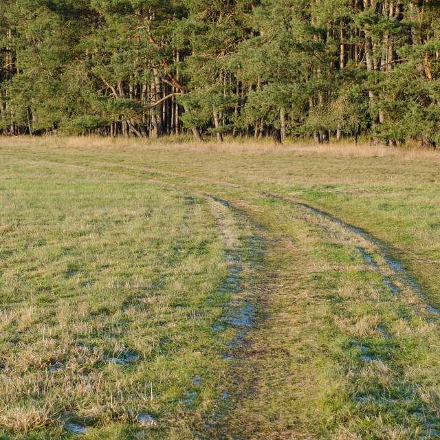 """""""Frosty Trails In A Meadow"""" stock image"""