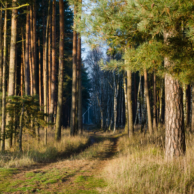"""""""Entering The Forest"""" stock image"""