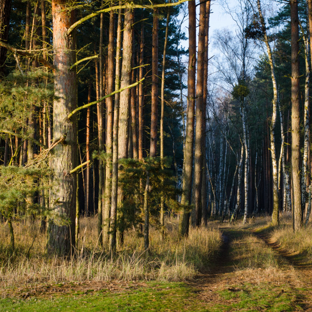 """""""Golden Entrance To The Forest"""" stock image"""