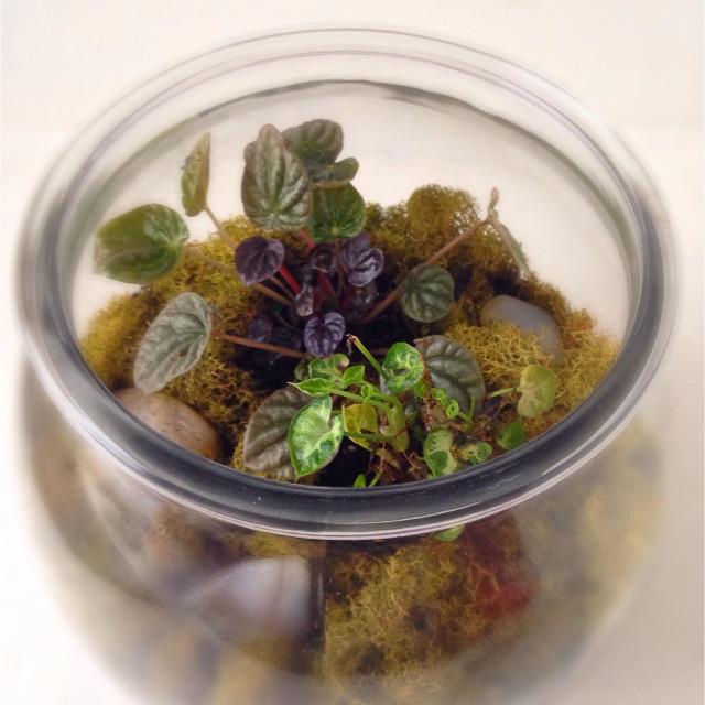 """A terrarium full of plants."" stock image"