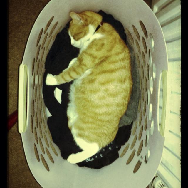 """""""Ginger cat sleeping in a washing basket"""" stock image"""