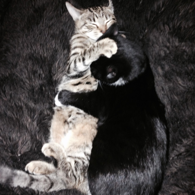 """Kittens having a cuddle"" stock image"