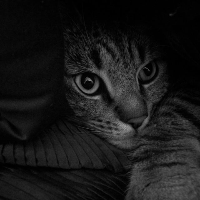 """Cosy cat"" stock image"