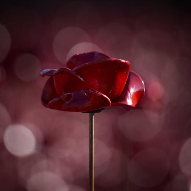 """A ceramic poppy from tower bridge"" stock image"