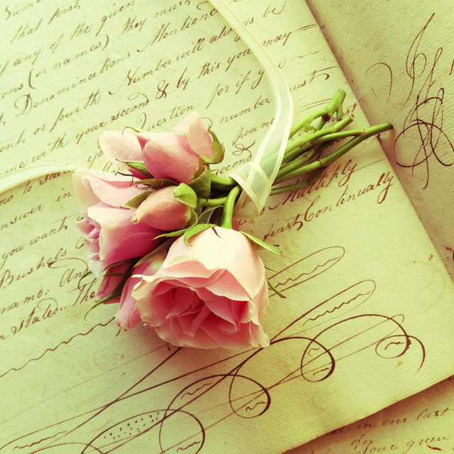 """Pink roses with ribbon on old handwriting"" stock image"