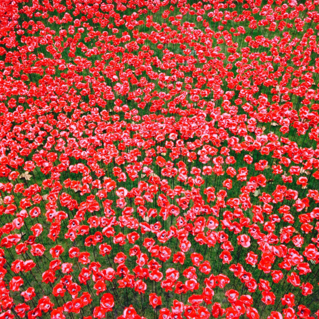 """""""Ceramic Poppies from the Tower of London"""" stock image"""