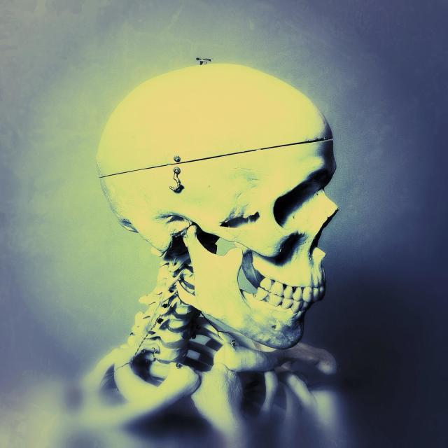 """""""Portrait of a medical skeleton"""" stock image"""