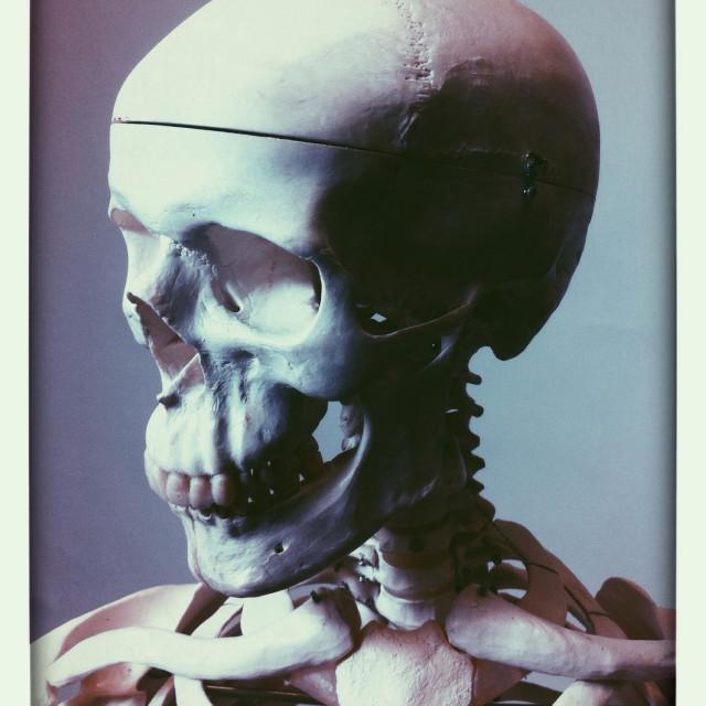"""""""Human skeleton"""" stock image"""