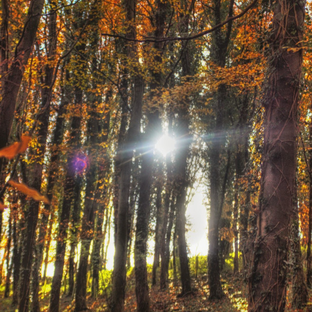 """Sunlit Millington Woods"" stock image"