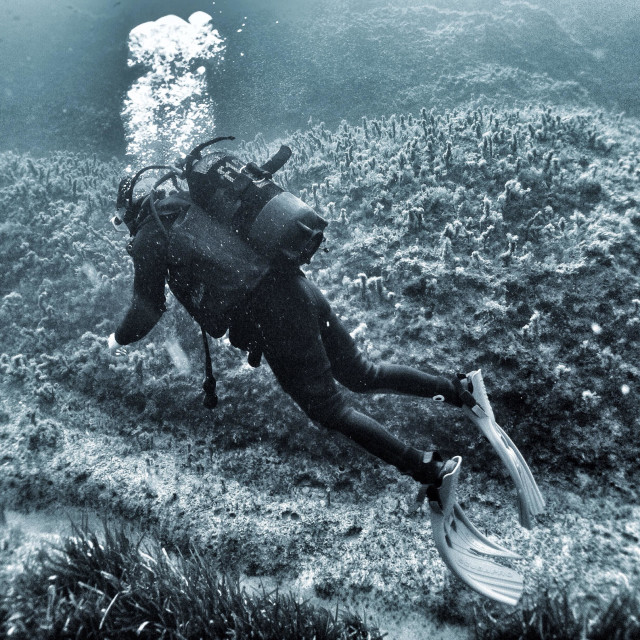 """""""Young female scuba diver swimming underwater in full wetsuit."""" stock image"""