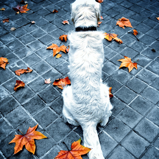 """""""Max waiting for his walk"""" stock image"""