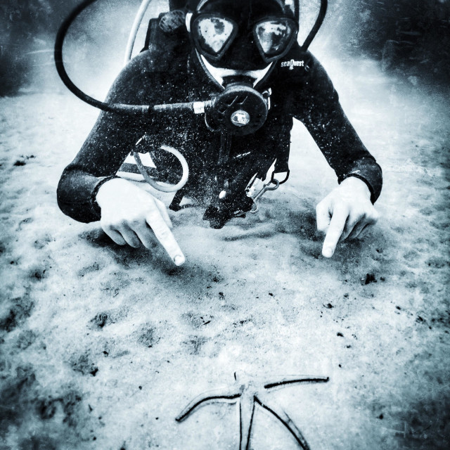 """""""Young male scuba diver pointing at starfish underwater in the sea"""" stock image"""