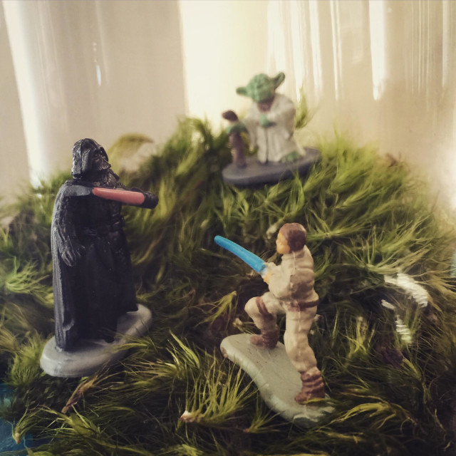 """""""Star Wars characters in a moss terrarium - Darth vader, luke sky walker and Yoda, complete with light sabers"""" stock image"""