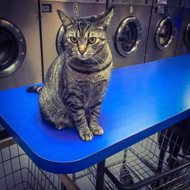 """""""Laundromat kitty"""" stock image"""