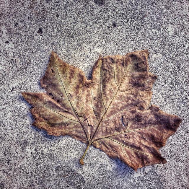 """Urban leaf , fall colors"" stock image"