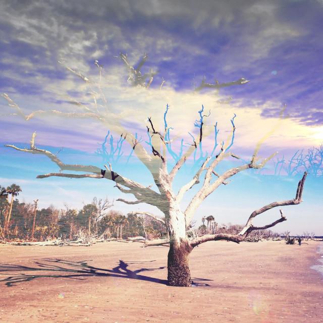 """A double exposure of a lone tree on Edisto Island, South Carolina."" stock image"
