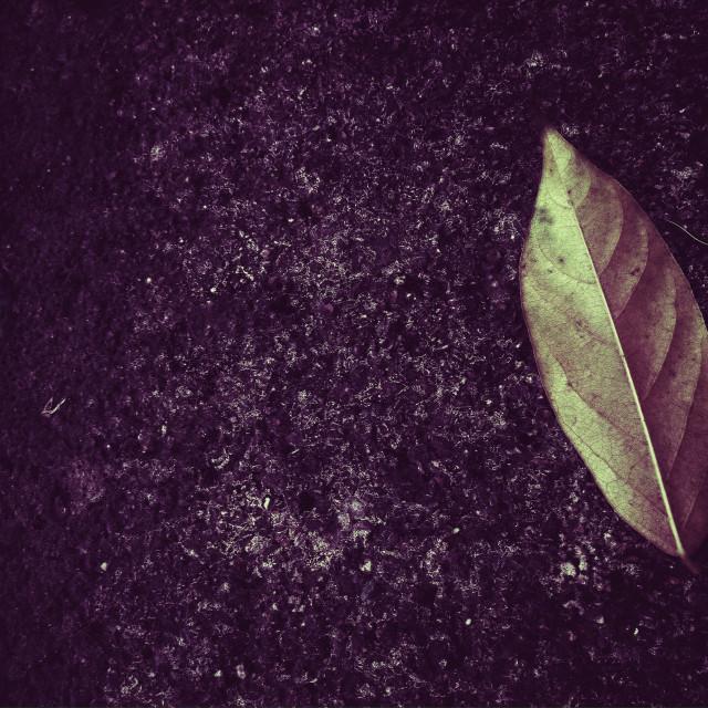 """Leaf, Background for concept"" stock image"