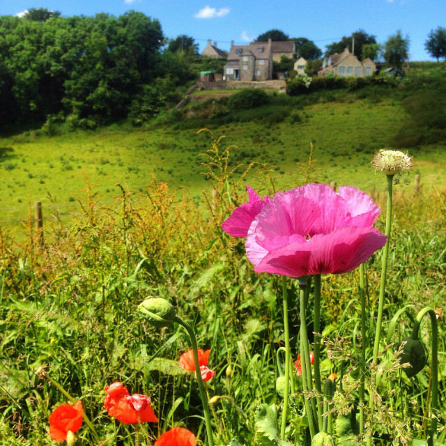 """""""Looking towards Tresham, Gloucestershire, UK"""" stock image"""