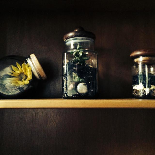 """Three glass jar terrariums on a woods shelf."" stock image"